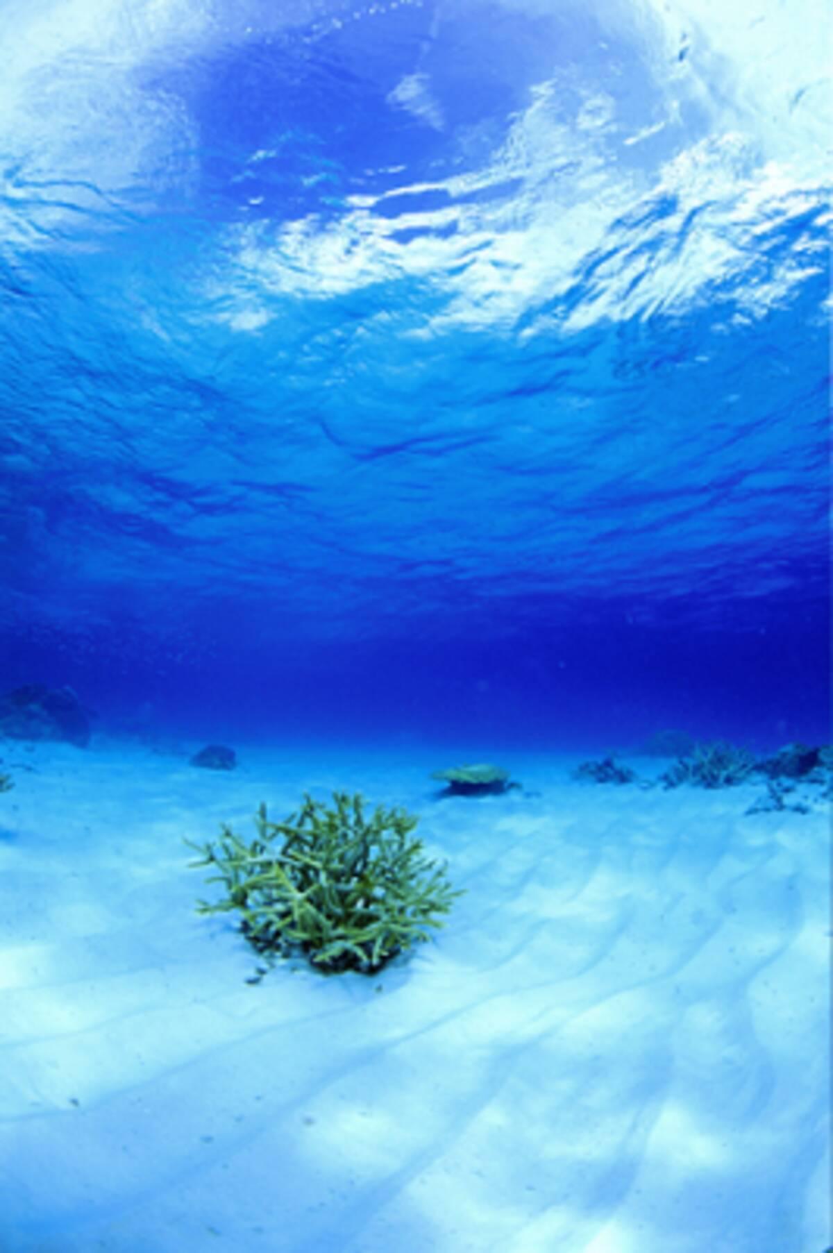 美しい風景や花 世界遺産 壁紙 を無料でゲット 10年6月9日 エキサイトニュース