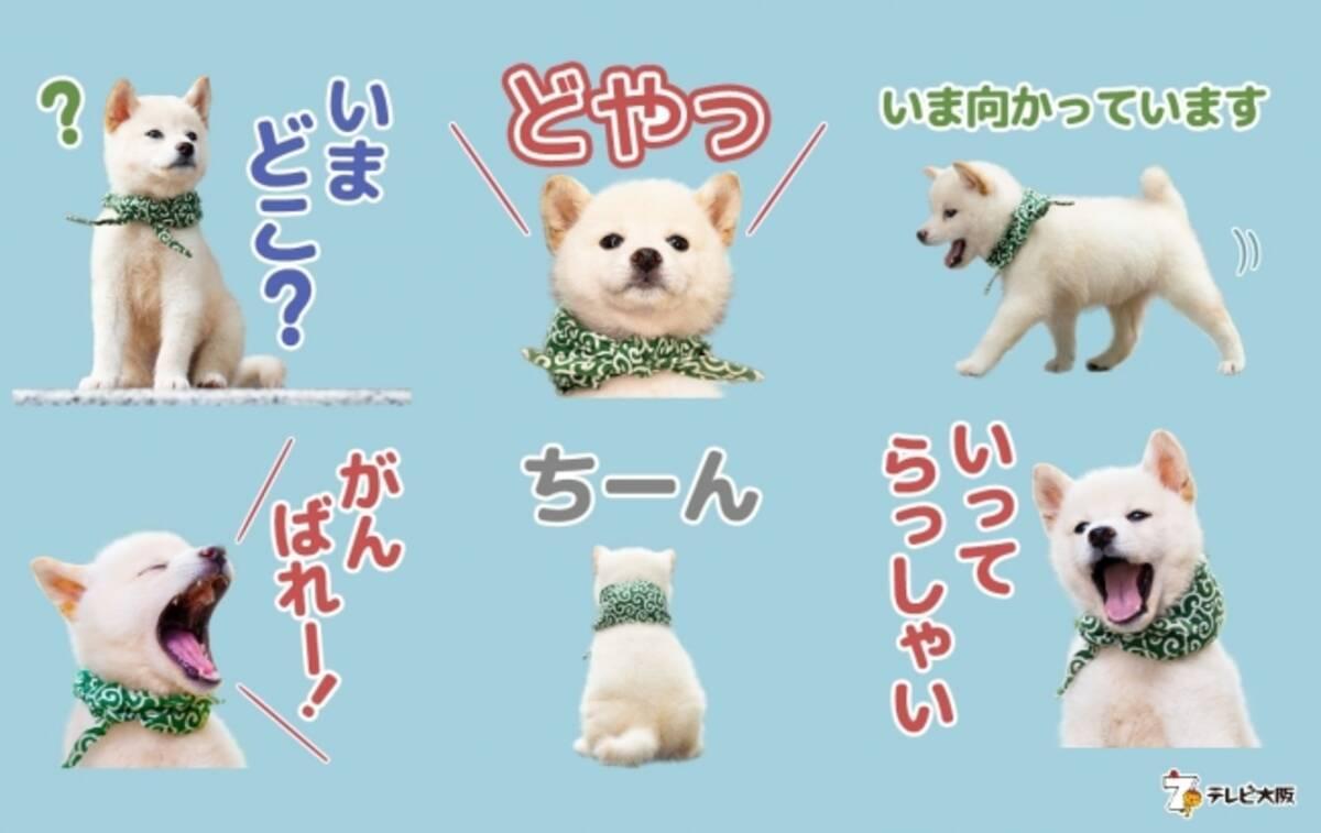 豆助のlineスタンプが出ました 二代目和風総本家のマスコット犬 二十