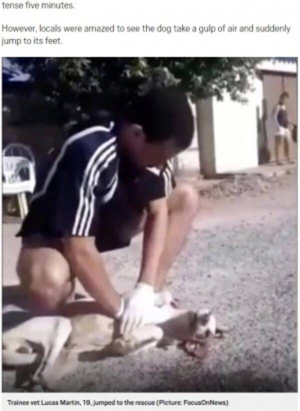 獣医見習いの19歳、路上で心肺停止の犬の命を救う(ブラジル)<動画 ...