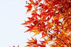 秋に恋人をつかまえるための3つのヒント