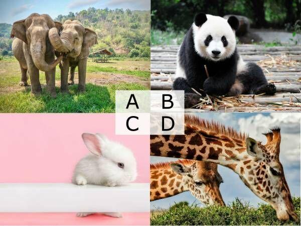 【4択診断】動物園デート!気になる彼と一緒にみたい動物はどれ?