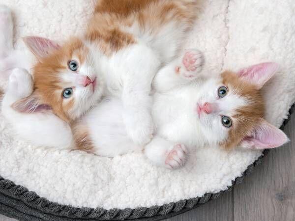 猫好きを恋愛でアピール