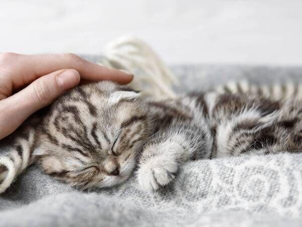 猫を恋愛の味方につける