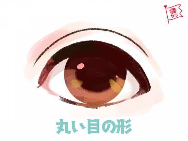 丸い目の形をしている