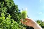 乳酸菌入り青汁のおすすめ12選!原料とタイプで選ぶ