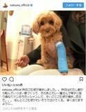 夏菜、4歳の愛犬が骨折「かわいそうで泣けてくる」