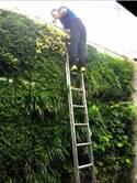 東尾理子、自宅こだわりの壁面緑化を公開「一年で一番緑の調子が良い!」