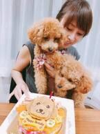 渡辺美奈代、愛犬用のバースデーケーキ公開「とっても喜んで食べてくれました」