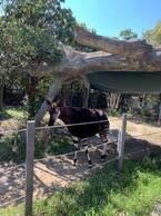 料理研究家・桜井奈々、初めて訪れた動物園を絶賛「期待以上 動物園!というより、、テーマパークのよう」