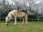 佐藤藍子、愛馬に乗ってお花見「息子は花より団子ならぬ青草」