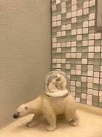 政井マヤ、苦戦していたトイレのDIYが完成「初めてにしては、がんばりました」