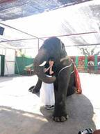 道重さゆみ、象との仲良し2ショット公開に「お姫様みたい」「象になりたい」の声