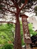 藤原紀香、縁結び神社を訪れる理由を明かす「いいパートナーがいるのになぜ?」