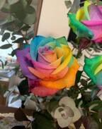 小林麻耶さん、義祖母が飾ってくれたカラフルな薔薇を公開「素敵」「感動」の声