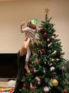 """藤本美貴、家族でクリスマスツリーの飾りつけをし""""幸せ""""な時間「来年は5人で」"""