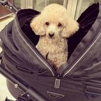 矢田亜希子、ペットカートに乗せた愛犬と買い物「息子のベビーカー時代を懐かしく」