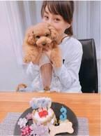 渡辺美奈代、愛犬のために手作りしたバースデーケーキを公開「すごーい」「可愛い」の声
