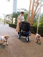 渡辺美奈代、愛犬用のバギーを購入「素敵」「愛が溢れています」の声