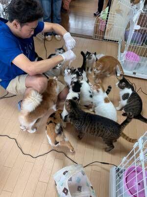サンシャイン池崎と保護ネコのボランティアへ「猫好きにとって夢の様な光景」