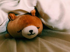"""水嶋ヒロ、母から貰ったぬいぐるみと""""さっそく寝てみた""""と報告「続けてみよ 笑」"""