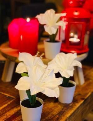 """LiLiCo、2019年""""ラスト""""IKEAとH&Mでの購入品を公開「ほーー!!!!!!!!999円」"""