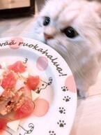 後藤真希、愛猫の誕生日に用意した食事を公開「ごちそうを用意してみたよ」