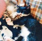 """猫なのに""""狸寝入り""""も! かわいすぎる猫の寝相No.1は?"""
