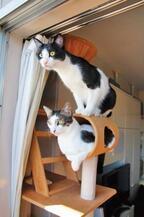 発射準備オッケー! 今にも飛び出しそうなロケット猫