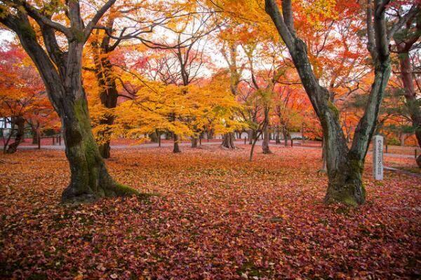 「秋の京都はとにかく美しい」とは歌手のJUJUさん。