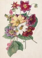 大人気ボタニカル柄の原点『イングリッシュ・ガーデン 英国に集う花々』展、汐留で開催