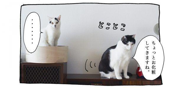 【猫写真4コママンガ】「メイク教室」パンチョとガバチョ #82