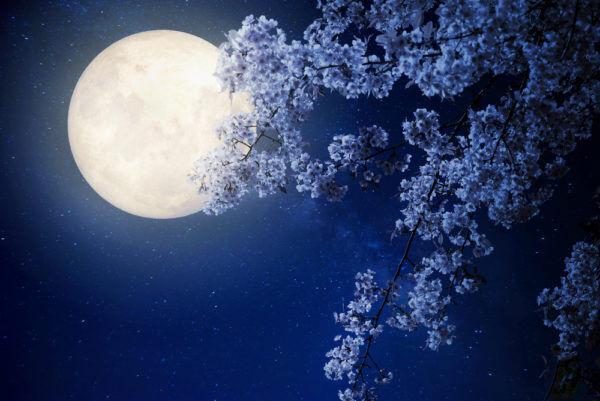 ねぇ知ってた…?本当は怖い「桜の木」にまつわる不吉な話4つ