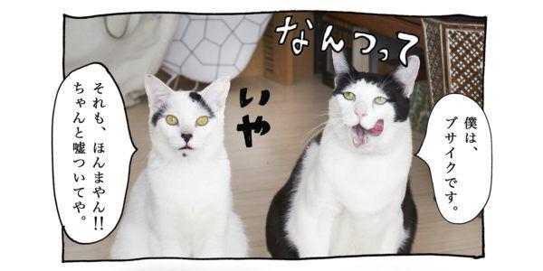 【猫写真4コママンガ】「嘘つき」パンチョとガバチョ #85