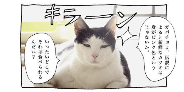 【猫写真4コママンガ】「旅ネコ」パンチョとガバチョ #86