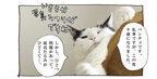 【猫写真4コママンガ】「ひきしめダイエット」パンチョとガバチョ #87