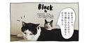 【猫写真4コママンガ】「ゆかいな動物仲間たち」パンチョとガバチョ #88