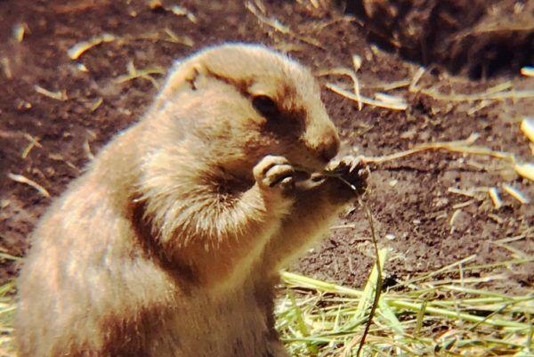 サルのエロ姿も…! 『上野動物園』で小動物を超かわいく撮っちゃうコツ #34
