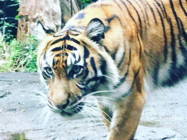 美尻に興奮…  『上野動物園』で人気動物を超かわいく撮っちゃうコツ #35