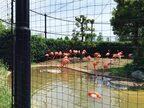 鳥がイケメン!?   『上野動物園』で鳥を超かわいく撮っちゃうコツ #36