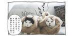 【猫写真4コママンガ】「ヒットメーカーコンビ誕生」パンチョとガバチョ #92