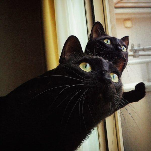 UFO発見!? その時2匹の猫は驚いて…猫さまシンクロ賞