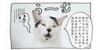 【猫写真4コママンガ】「遠まわしな拒絶?!」パンチョとガバチョ #95