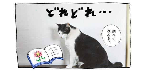 【猫写真4コママンガ】「わたしの花言葉」パンチョとガバチョ #98
