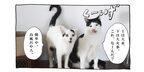 【猫写真4コママンガ】「褒められて伸びるタイプ」パンチョとガバチョ #99