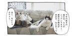 【猫写真4コママンガ】「秋冬トレンド被り物」パンチョとガバチョ #100