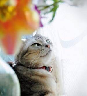"""あざとい、でも、かわいい! 美猫の""""キメ顔""""にキュン死!"""