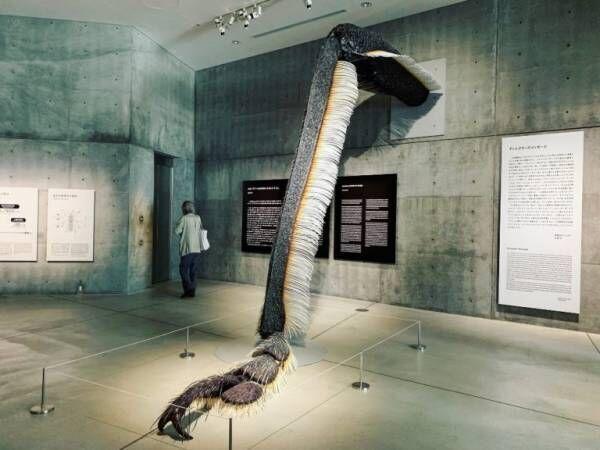 【クイズ】ゾクッ…これはある虫の脚を拡大したもの。その虫とは?