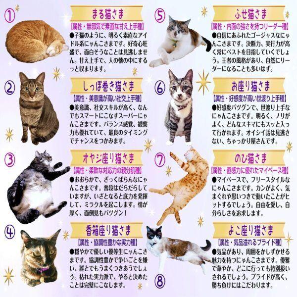 【猫さま占い】恋愛最強運の猫さまは? 11月11日~11月17日運勢ランキング