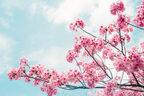 あの花が咲いたら不吉… 本当は怖い「春の風物詩」4つ