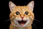 【診断】この猫さまはなんと言ってる…? 答えで分かる「男からモテる」テク